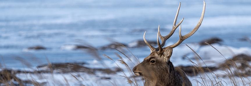 Deer blind financing top pic.