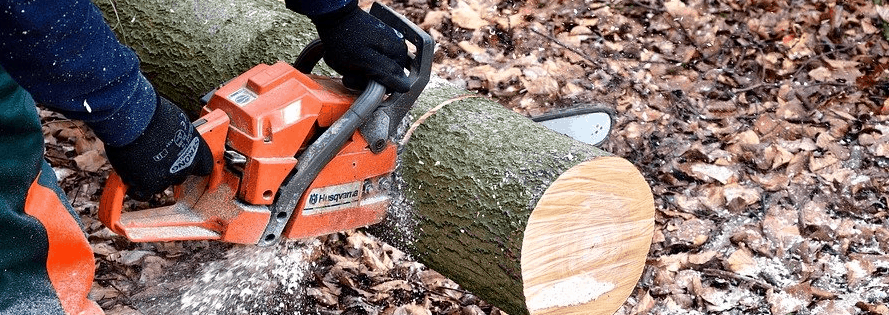 Cutting a tree after chainsaw financing.